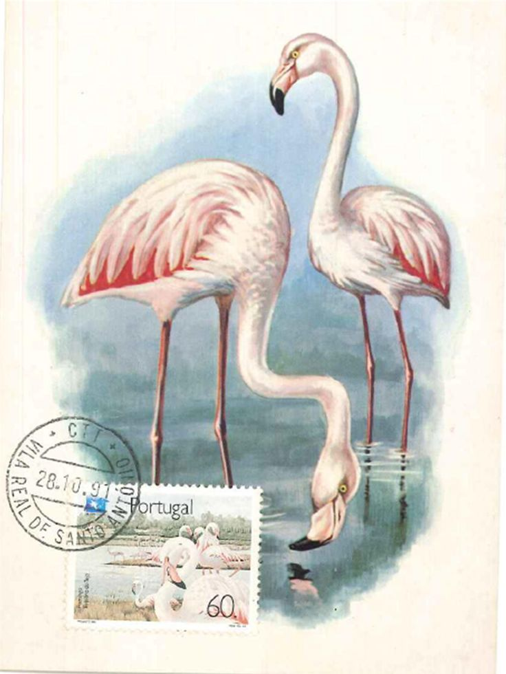 Flamingos Vila Real de Santo António