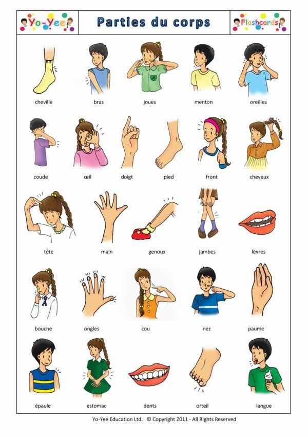 portuguese flashcards - Yahoo Image Search Results