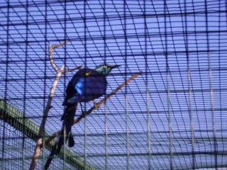 ήτοι μέν πρώτιστα Χάος γένετ': Περί ελευθερίας