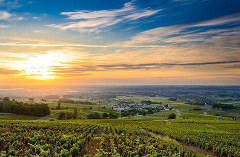 Beaujolais, Burgundy, France