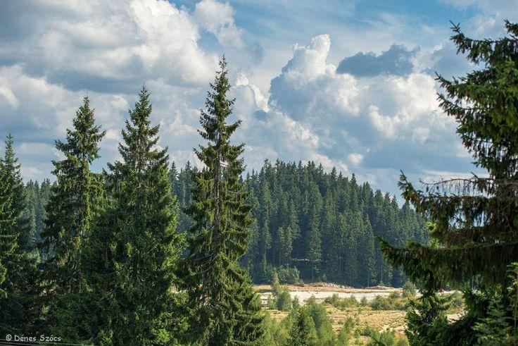 Hargitafürdő - Fotó: Szőcs Dénes