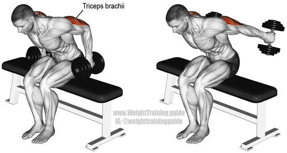 Seated bent over two arm dumbbell kickback. An isolation and push exercise. Target muscle: Triceps Brachii. Stabilizer muscles (not highlighted): Posterior Deltoid, Latissimus Dorsi, Middle and Lower Trapezii, Rhomboids, Extensor Carpi Ulnaris, and Flexor Carpi Ulnaris.