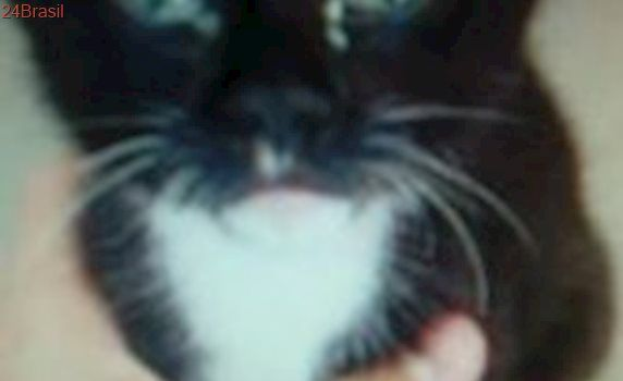 Três gatos bebês são abandonados dentro de ecoponto