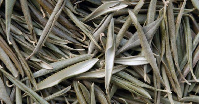 Expertos aseguran que esta simple hoja es muy efectiva para la hipertensión, alzheimer y más, el extracto de la hoja de olivo posee...