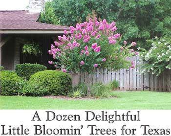 Best Little Trees for Landscaping - Texas