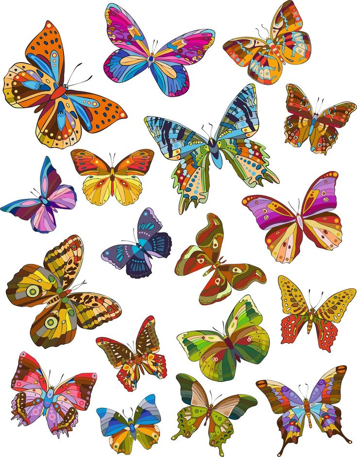 25 best ideas about mariposas de colores on pinterest - Imagenes de mariposas de colores ...