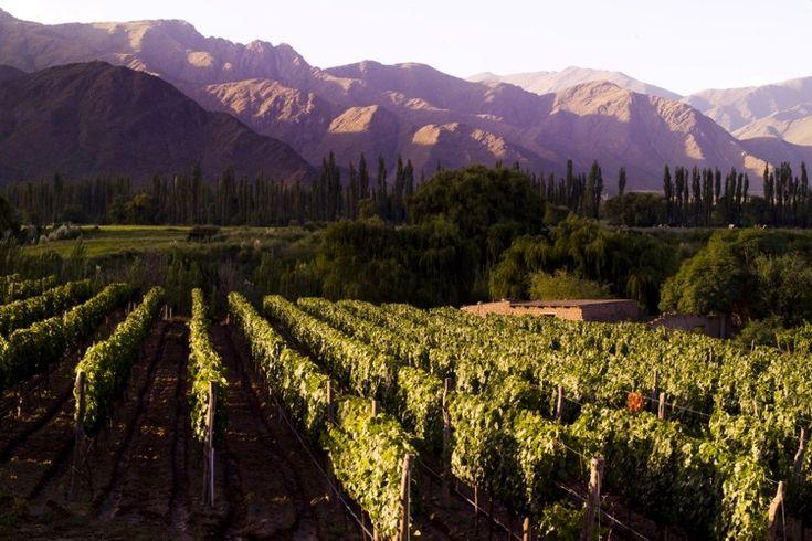 Vineyards in Salta, Argentina...