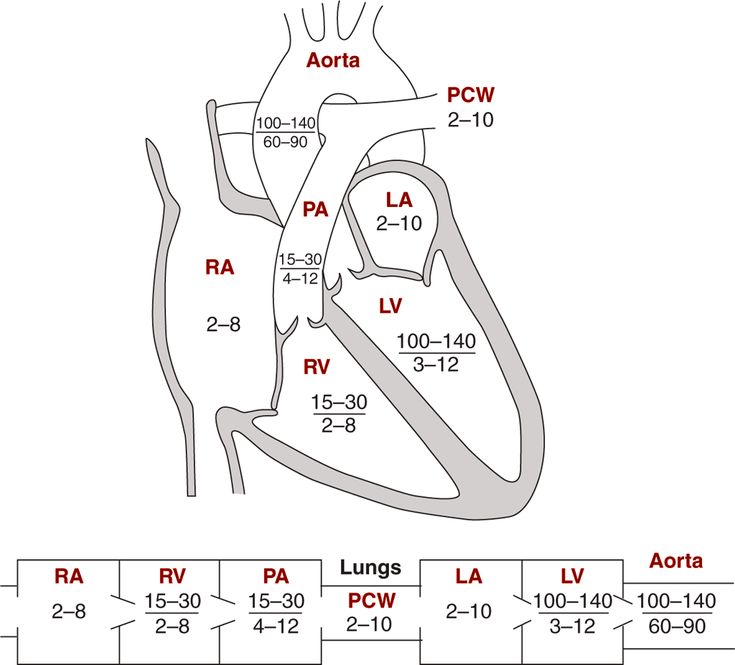 pediatric ekg lead placement diagram 2002 mitsubishi lancer oz rally wiring image: diagrams indicating normal pressures in the cardiac chambers &… | anatomy pinterest ...