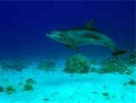 Bottlenose Dolphin Habitat - Bing Images