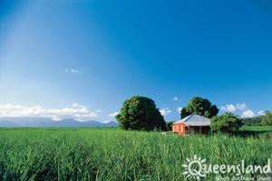 Sugar Cane Farm, Townsville, Qld
