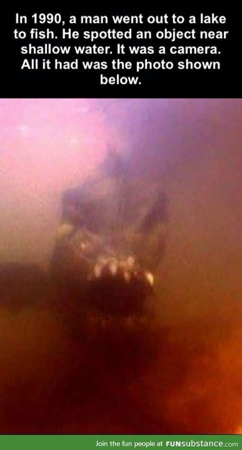 This is a nopefish aka devils goldfish
