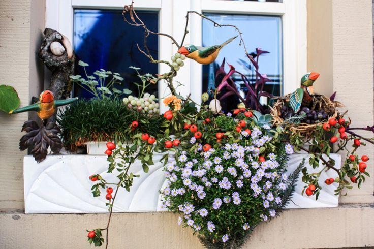 Hübsch dekoriert: das Fenster in Iphofen  ... #fenster #franken