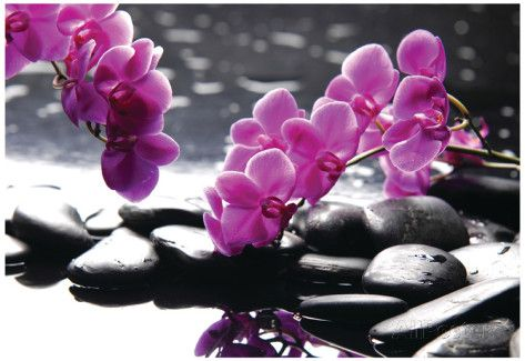 Branch Purple Orchid Flower With Therapy Stones Poster bij AllPosters.nl