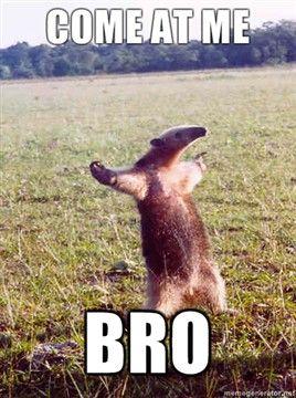 Come at me Bro¡!