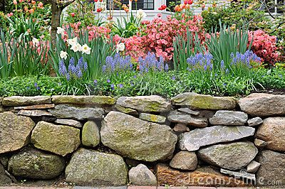 dry stacked rock walls | Dry stone wall, New England style, and colorful garden.