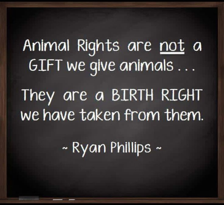 best 25 animal rights quotes ideas on pinterest animal