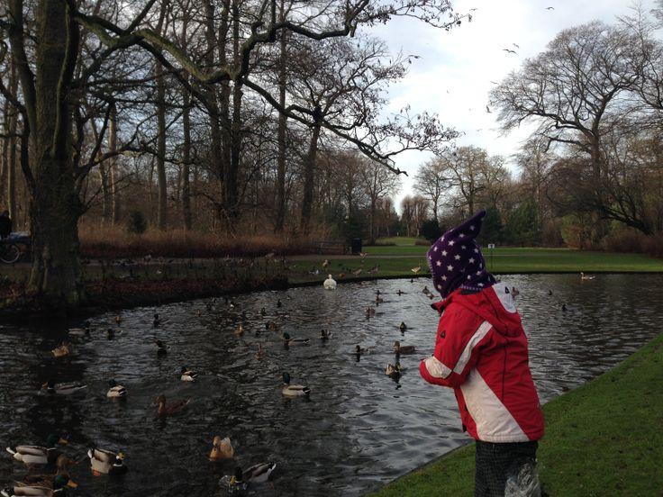 Frederiksberg Have er oplagt til en rask gåtur med et rigt fugleliv.