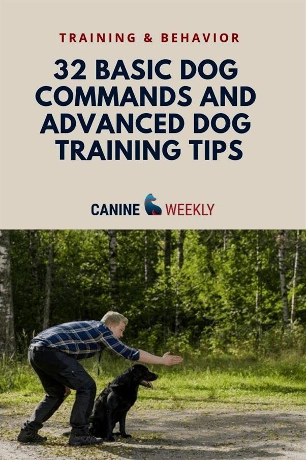 Dayton Dog Training Club Dog Training Urine Spray Basic Dog