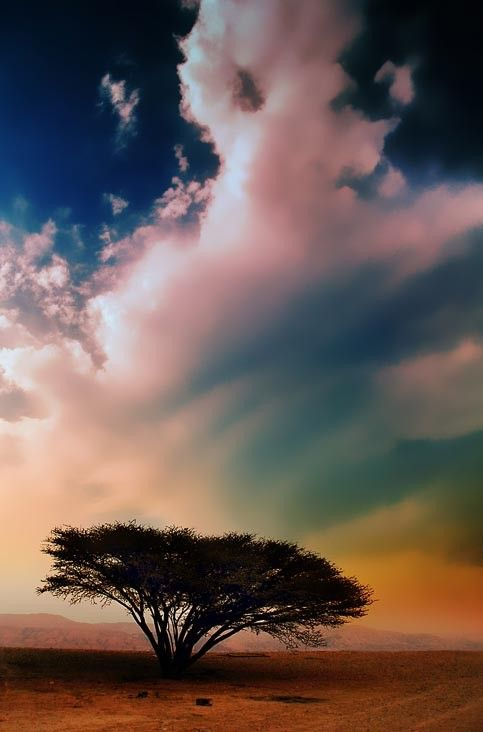 #trees #trees #trees, sky, and colors