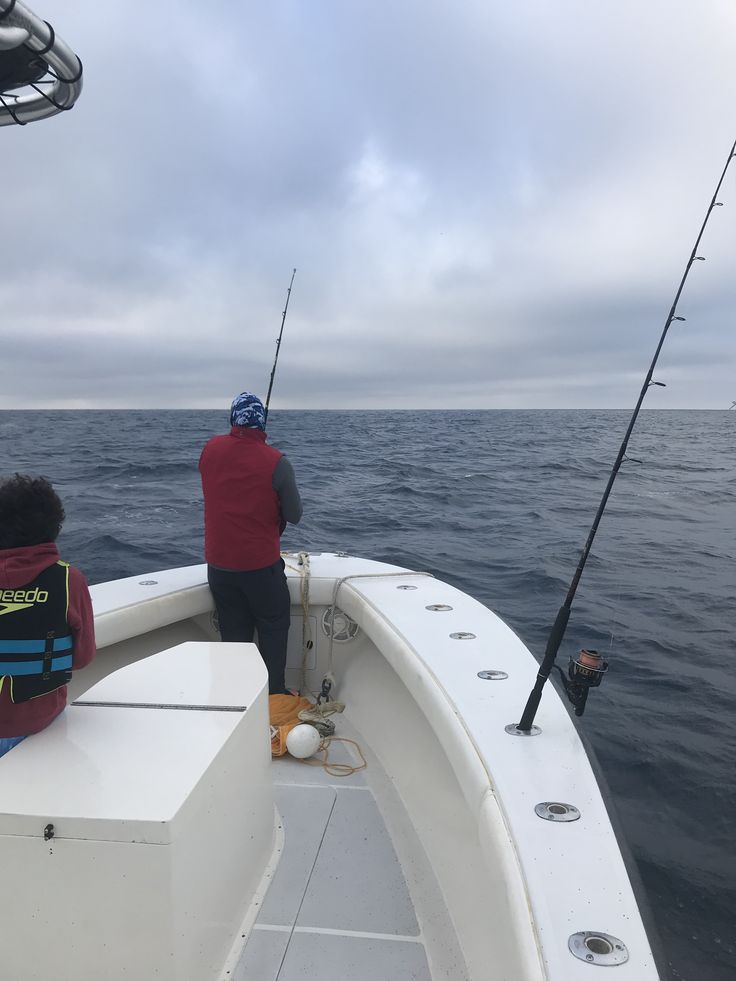 Fearless Fishing Report for Dec. 30 (#Islamorada, FL): Today we fished a half day and we started off kite fishing. We were able to hook up with a double header #Sailfish right off the bat! We caught and released both. We then caught a few #Barracuda on the way in. Seas were 2 to 3 feet #fearless #fishing #charter #conch27 #captjoehendrix #offshore #keysstrong