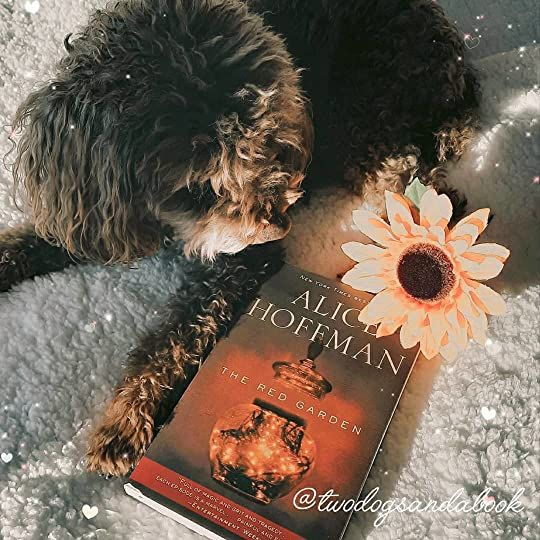 Click on the image to read my complete book review. #bookstadog #poodles #poodlestagram #poodlesofinstagram #furbabies #dogsofinstagram #bookstagram #dogsandbooks #bookishlife #bookishlove #bookstagrammer #books #booklover #bookish #bookaholic #reading #readersofinstagram #instaread #ilovebooks #bookishcanadians #canadianbookstagram #bookreviewer #bookcommunity #bibliophile #theredgarden #alicehoffman #bookreview