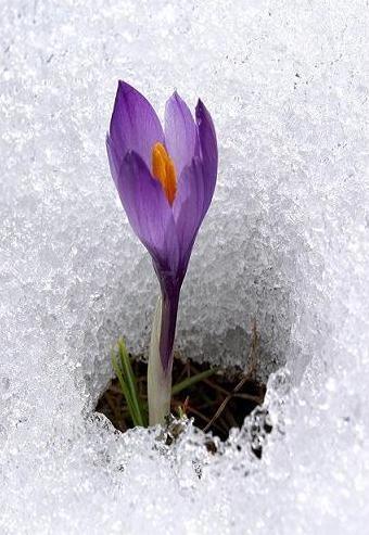 Ice Flower in MY HEART ...