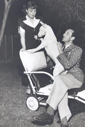 Actor Basil Rathbone and his wife Ouida with their white bull terrier, Judy.