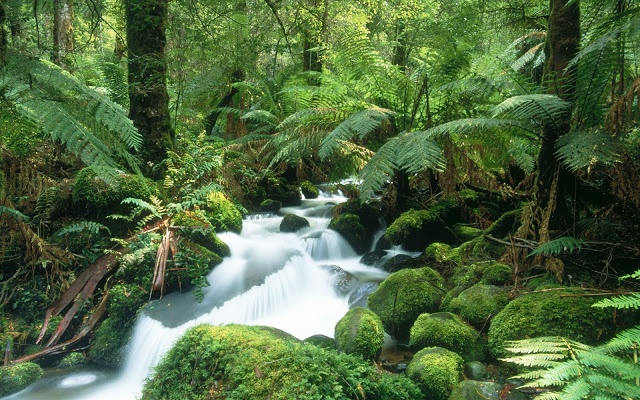 Cement creek yarra ranges national park.Victoria. | Most Beautiful Pages