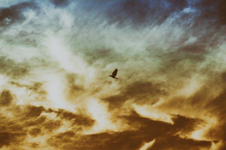 💚 Bird Flying on Cloudy Sky - download photo at Avopix.com for free    📷 https://avopix.com/photo/41579-bird-flying-on-cloudy-sky    #spring #landscape #sky #water #geyser #avopix #free #photos #public #domain