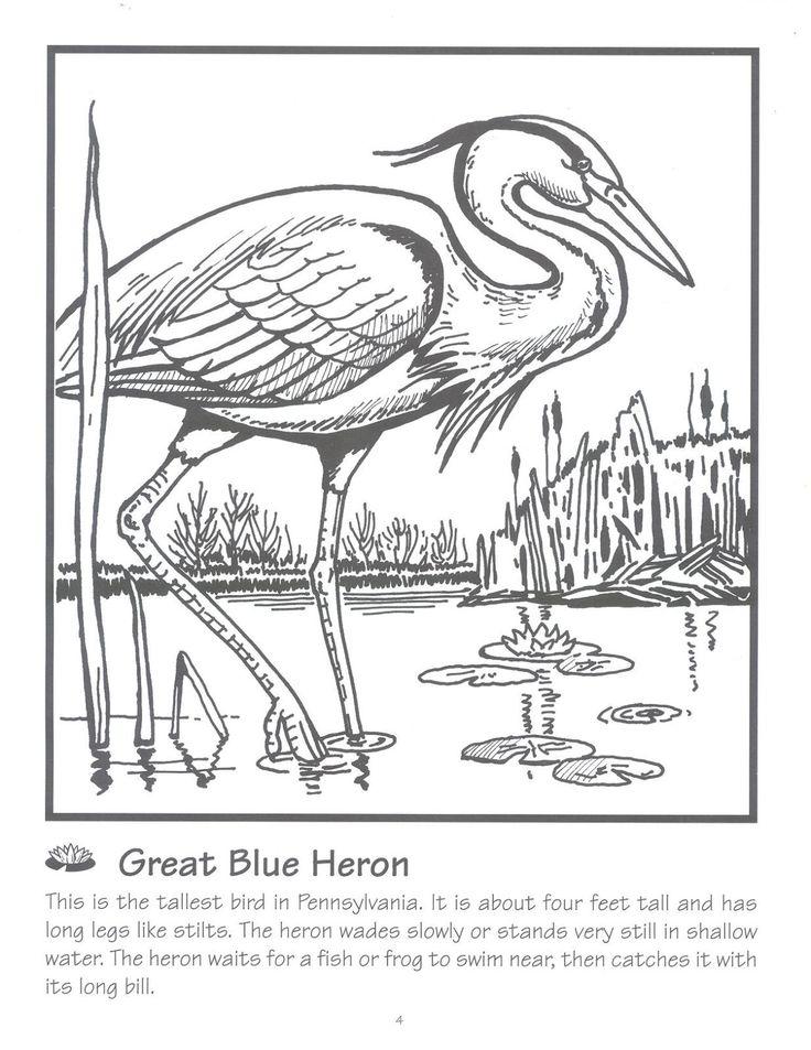 157 best Color Birds images on