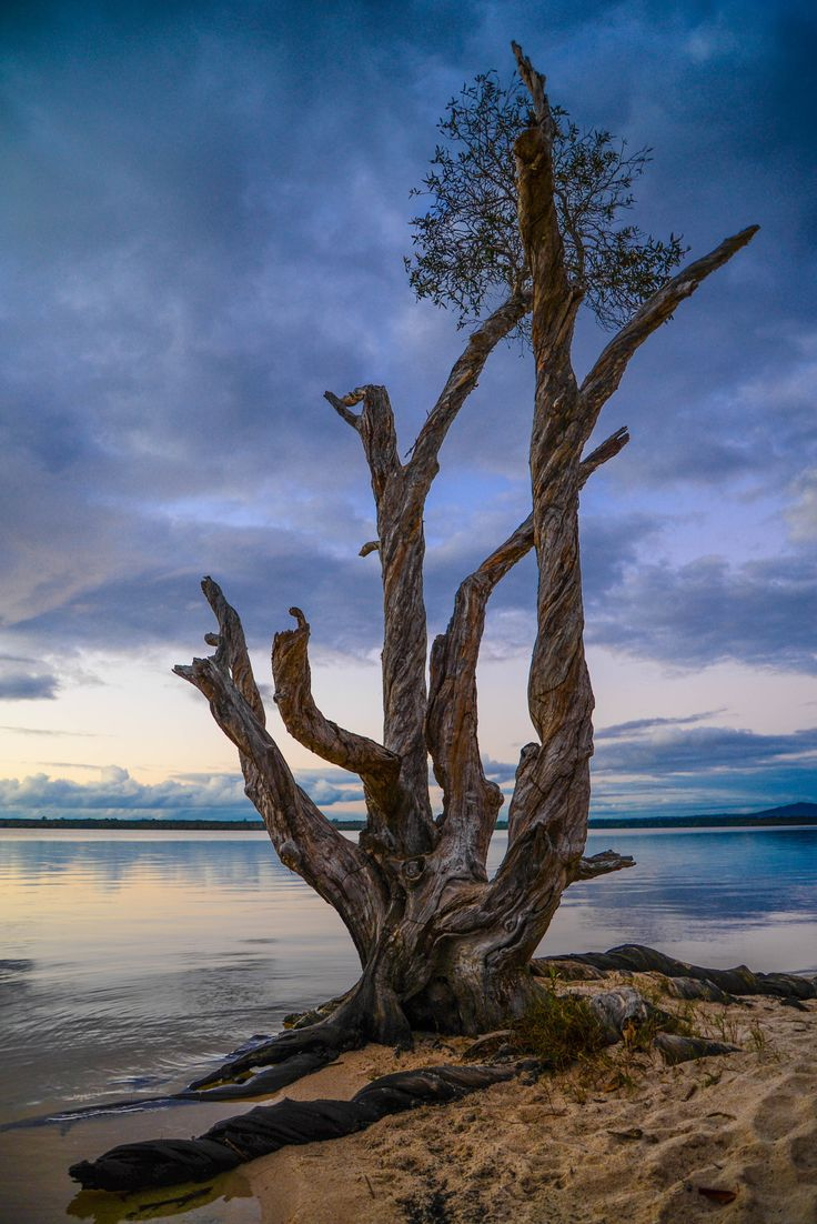 Tree by the Lake by Dee Holding on 500px