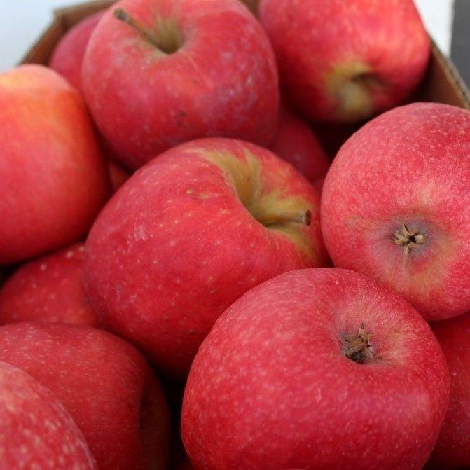 Fresh Stanthorpe Apples!