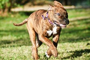 Huntingdon Hounds Doggy Day Care Pricing