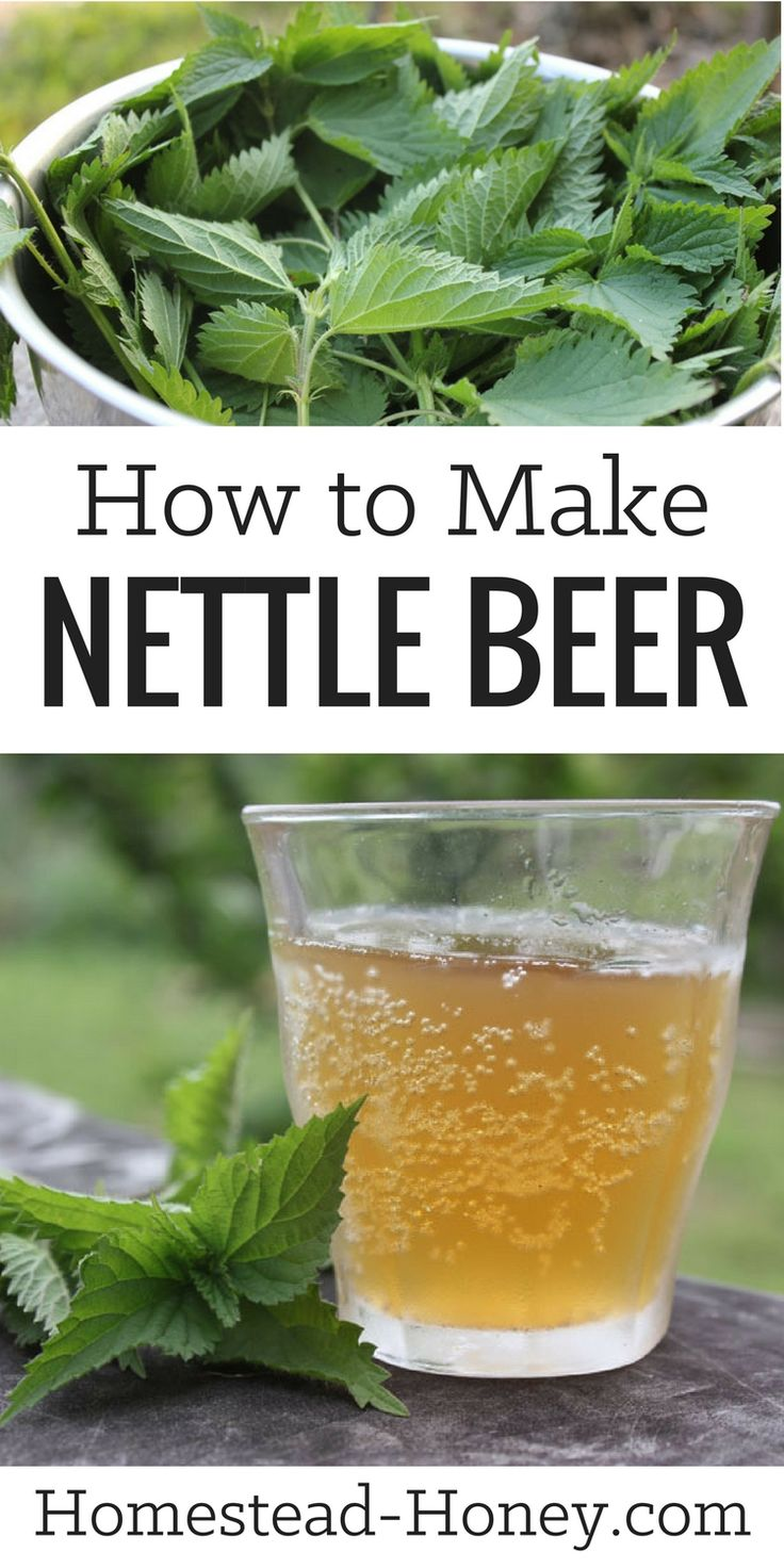 Tangy and mineral rich, this wild harvested and fermented nettle beer recipe is a delicious drink, reminiscent of hard cider. Learn how to make it at Homestead Honey.