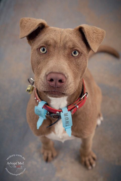 I saw this boy's photo last night and could wait to meet him today... his name is Chicco certainly didn't disappoint... a star in every way. He's has rescue backup with Fetching Dogs but is available to adopt should he not be reclaimed by his family (woul | by Jo Lyons Photography