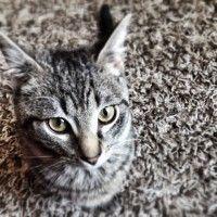 Le regard de chat.