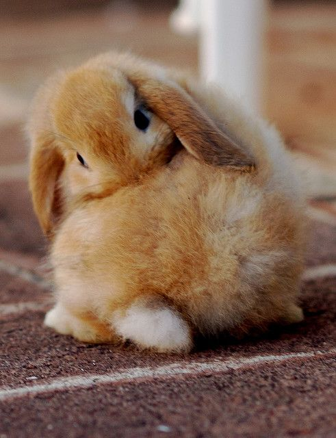 super cute #bunny | Cuties! | Pinterest