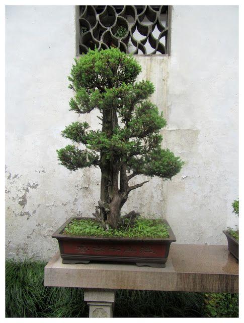 FASHION Secret Garden : #3 China
