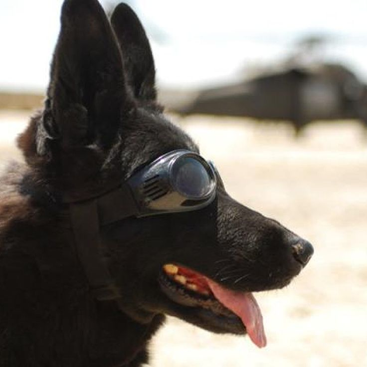 war dogs man s greatest ally Man's best friend let's see that pup in action share your dog photos with the world (and warby barker) on tumblr share your dog photos on tumblr.