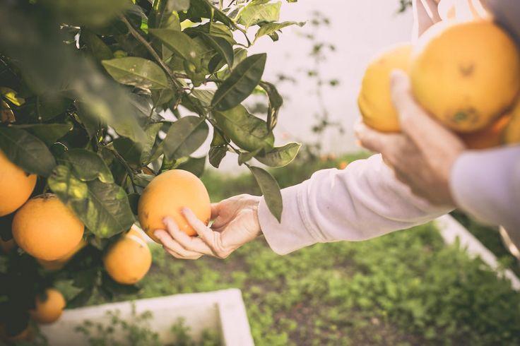 Hojaldrinas caseras #naranjas #fruta #postrenavidad #postre #navidad #enotrapiel