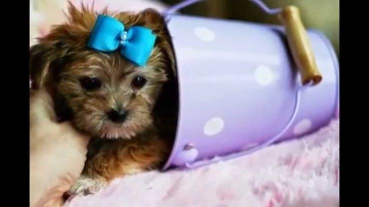 cutest small dog breeds 2016 WE SHIP