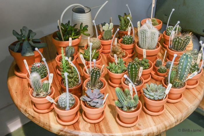 Una floristería un tanto peculiar | Plantas