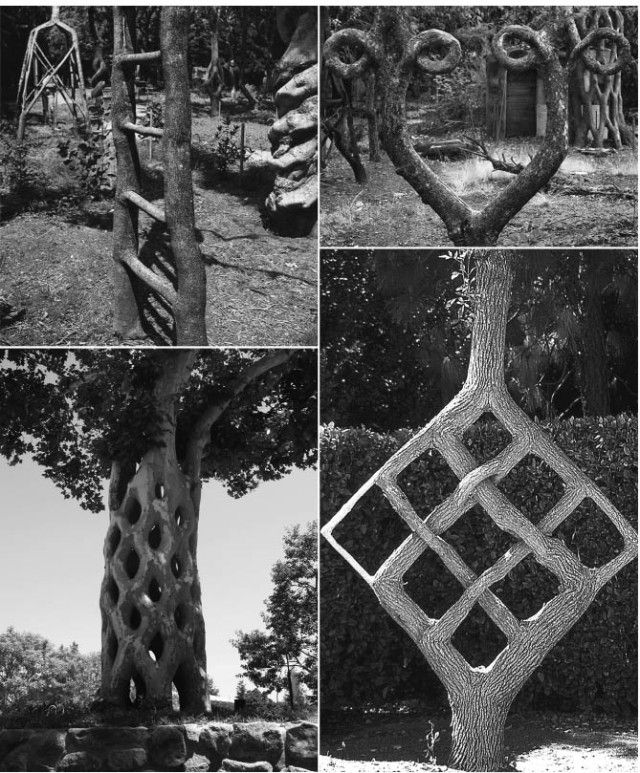 Axel Erlandson's Circus Tree sculptures The Weird Shaped Trees