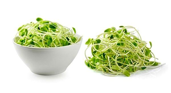 Klíčení luštěnin, obilí i jiných semínek, například řeřichy ...