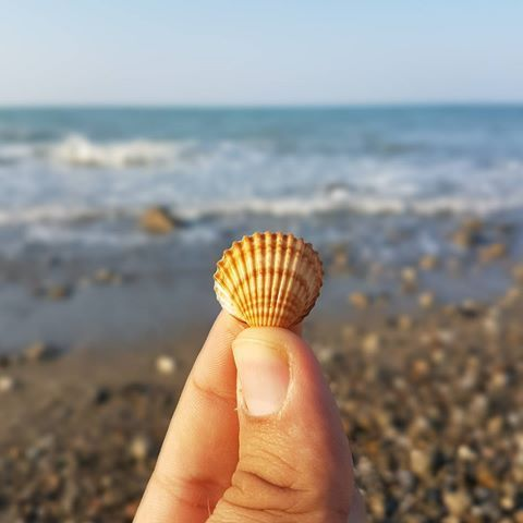 #sea #summer #beach #conchiglia #sun #hot #nice #calabria #shell #nature…