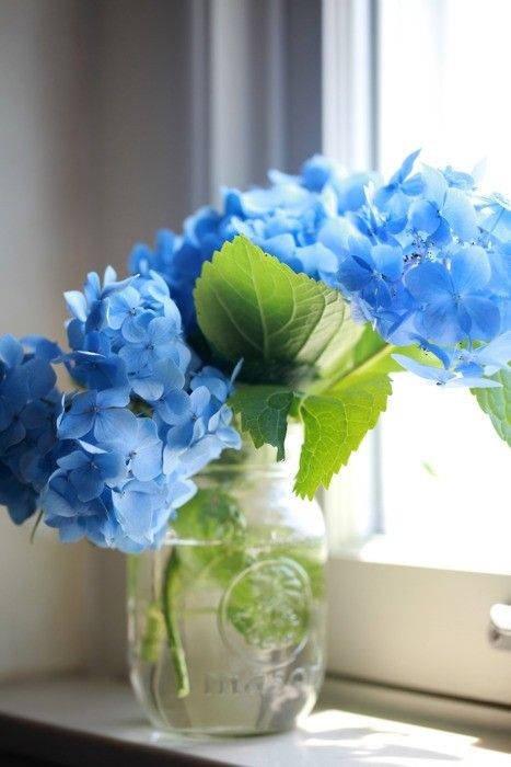 .Blue hydrangeas in a glass vase on the window sill