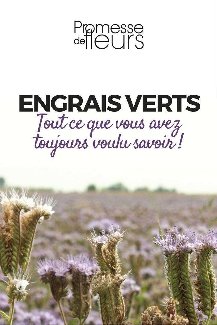 Les engrais verts, vous connaissez ? Moutarde blanche, Vesce, Phacélie, Sarrasin… pour ne citer qu'elles, sont couramment utilisées, à l'automne ou au printemps, comme « engrais vert ».