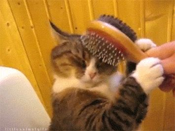 A cat in love.   15 GIFs That Will Make You Smile