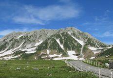 夏 〜高山植物の季節〜   四季を楽しむ   楽しみ方ナビゲート   立山黒部アルペンルート