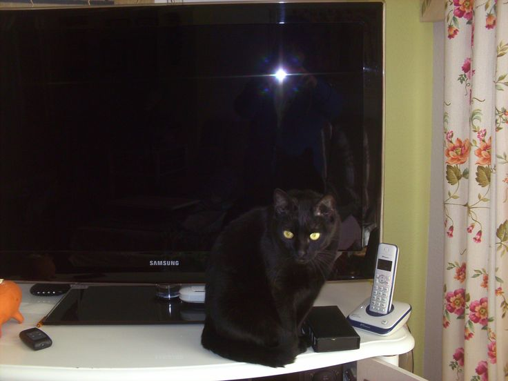 Salem custodiando la tele